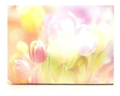 estor-enrollable-impresion-digital-screen-gallery-flores-0441