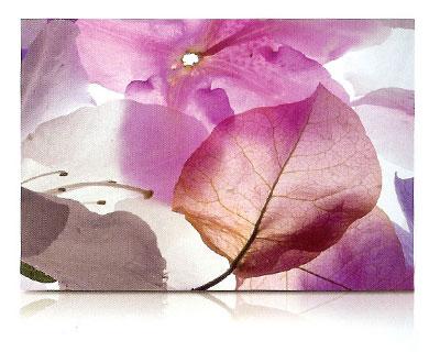 estor-enrollable-impresion-digital-screen-gallery-flores-0442